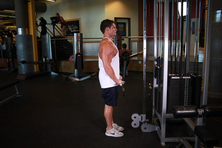 Standing Biceps Cable Curl Exercise Guide and Video