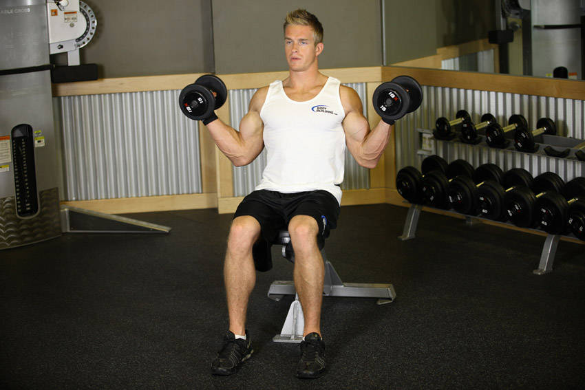 Seated Dumbbell Inner Biceps Curl image