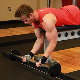 تمارين الذراع عضلة (البايسبس ) 298_1