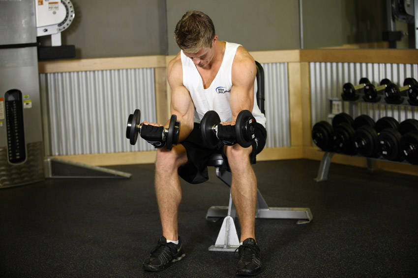 Seated Dumbbell Palms-Up Wrist Curl image