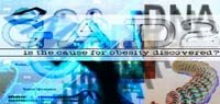 GAD2: Is The Cause For Obesity Discovered?