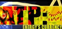 ATP: Energy's Currency!