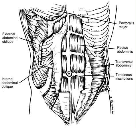 Diagram of abs