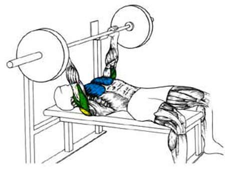 Liftrite Video Guide The Bench Press