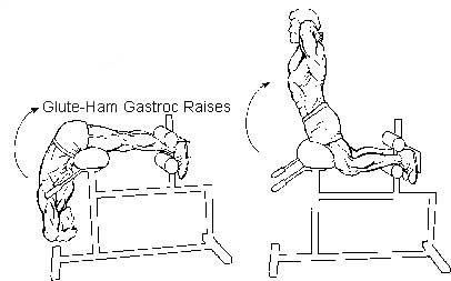 Image result for Glute Ham Raise