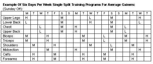 8 week bodybuilding program pdf