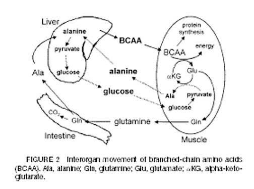 anabolic precursor supplements