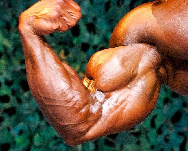 THE ENCYCLOPEDIA of MODERN BODYBUILDING: Want big biceps?