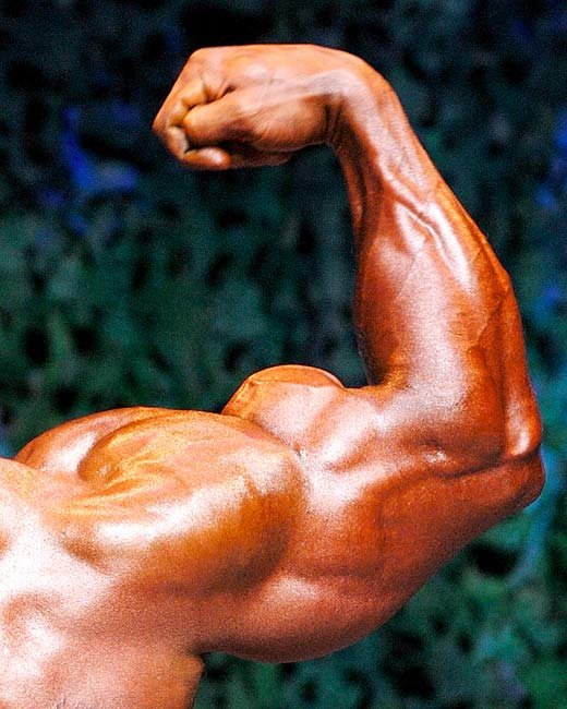 A How-To Guide To Build Huge Biceps!