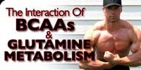 The Interaction Of BCAA's & Glutamine Metabolism.