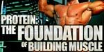 Protein - The Foundation Of Building Muscle!