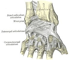 The Carpal Tunnel Is Essentially The Space Between The Hand And Bones.
