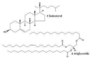 cholesterol and triglycerides