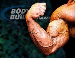 Bigger Biceps!