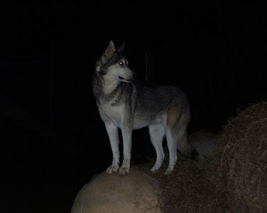 I Used To Bark At The Full Moon When I Was A Kid Thinking It Would Turn Me Into A Werewolf.