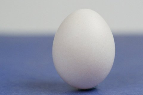 Egg Protein Contains All The Essential Amino Acids