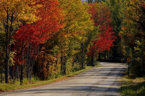 Fall Was In Full Swing And The Leaves Blazed With Vibrant Hues Of Red, Rust, Orange, And Yellow.