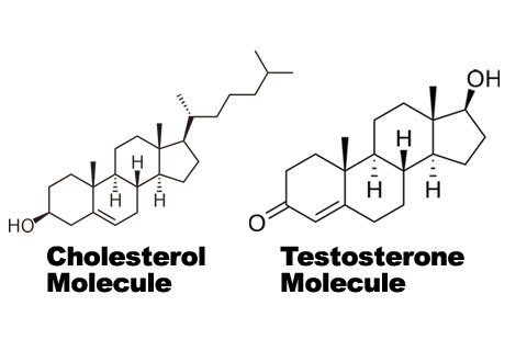 Notice The Similarity In Structure Between The Cholesterol And Testosterone Molecules.