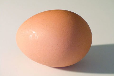 Originally Egg Protein Were Listed As Having The Highest Absorption Rate.