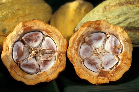 Cacao Beans Are The Richest Source Of Iron Available.