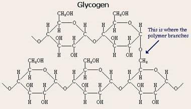 Glycogen Formula