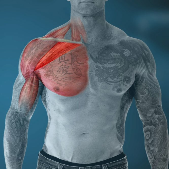 Jim Stoppani Phd Video Article Are You Using The Wrong Chest Exercise