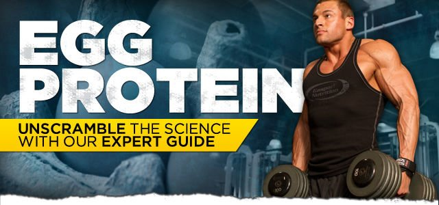 Egg Protein Unscramble The Science With Our Expert Guide