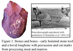 Early hominid stone tool