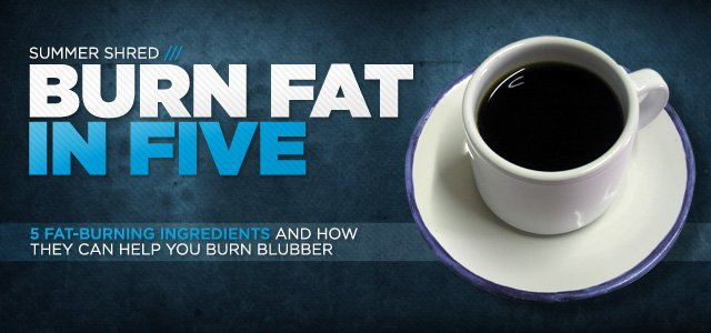 Fat Burner Facts: Get The Skinny On 5 Fat-Burning Ingredients
