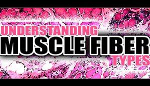 Understanding Muscle Fiber Types