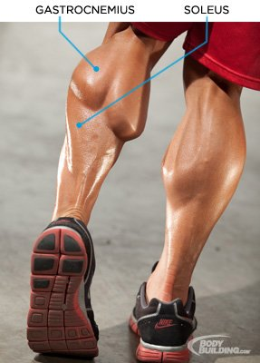 Does Flexing Your Legs Build Muscle