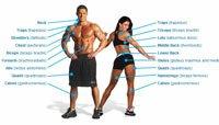 Bodybuilding.com Exercise Guide!