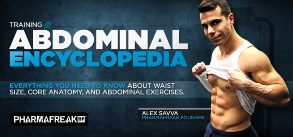 Abdominal Encyclopedia Core Anatomy And Effective Training