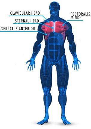 MUSCLE POWER bodybuilding magazine/VAL PASQUA 10-49
