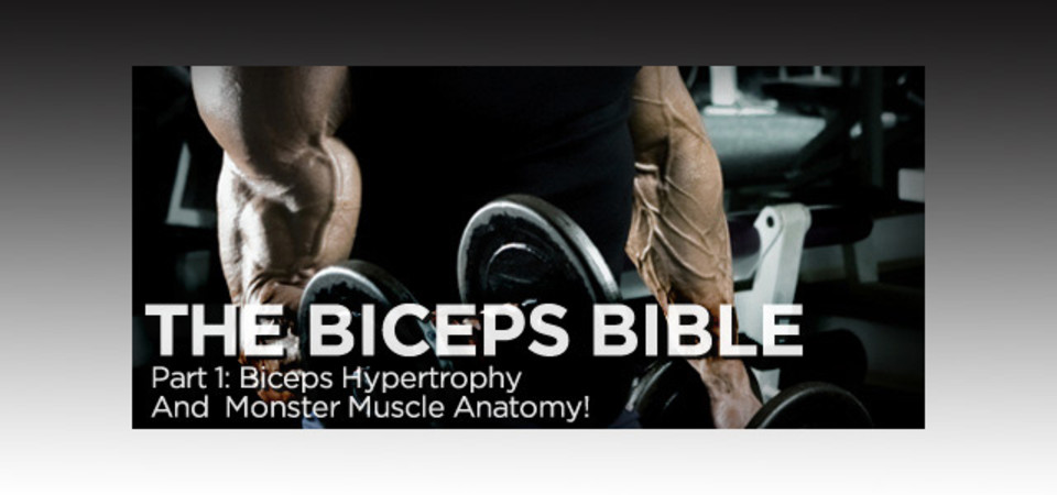 The Biceps Bible - Part 1: Biceps Hypertrophy And Monster Muscle ...