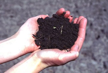 Today's Soil Is Stripped Of Precious Vitamins