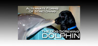 Alternate Forms Of Stretching: The Dog Screwing Dolphin!