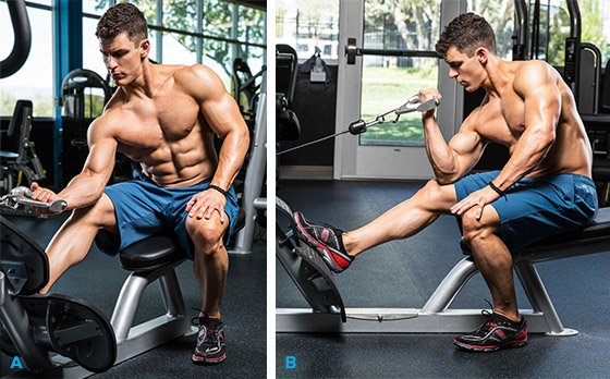 Seated Cable Concentration Curl