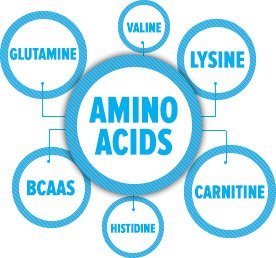 what are Amino Acids