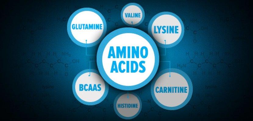 Amino Acids Guide!