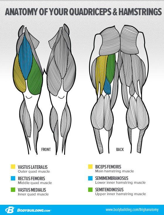 Ask The Siege   U0026 39 What U0026 39 S The Best Way To Build Big Legs  U0026 39