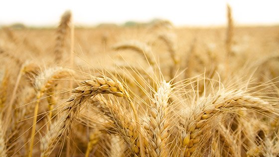 Even foods that are naturally gluten-free, such as oats, may contain some gluten due to cross-contamination of crops.