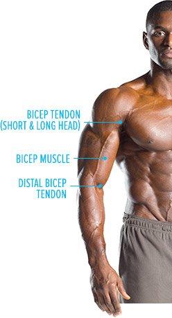 tendons explained