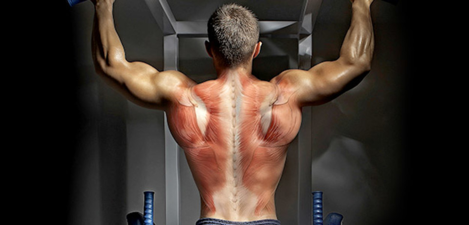 Back to basics your blueprint for building a bigger back malvernweather Gallery
