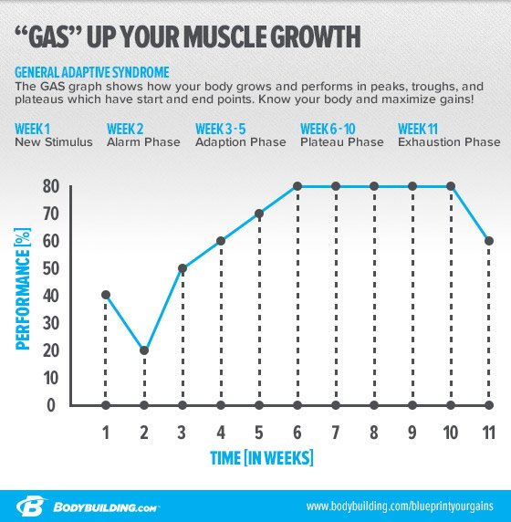 Blueprint your gains for long term growth training cycle that you plan to stick with for as long as possible its time to walk through each phase of the gas graph so you can see how it applies malvernweather Images