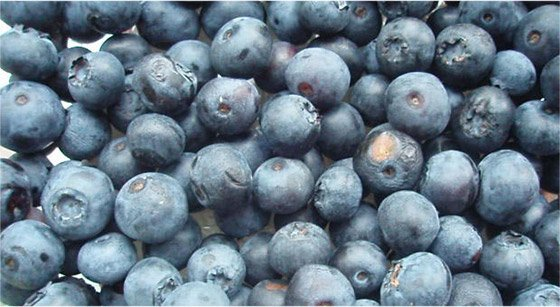 Even the skins Of blueberries are loaded with antioxidants.