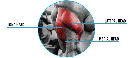 Tri-Sets For Bigger Triceps