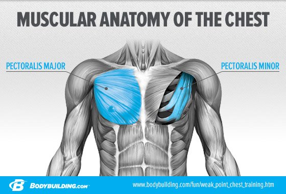 CHART With The Chest Its Easy To Feel It Much More In Triceps And Front Deltoids This Is A Common Problem We Will Address Shortly