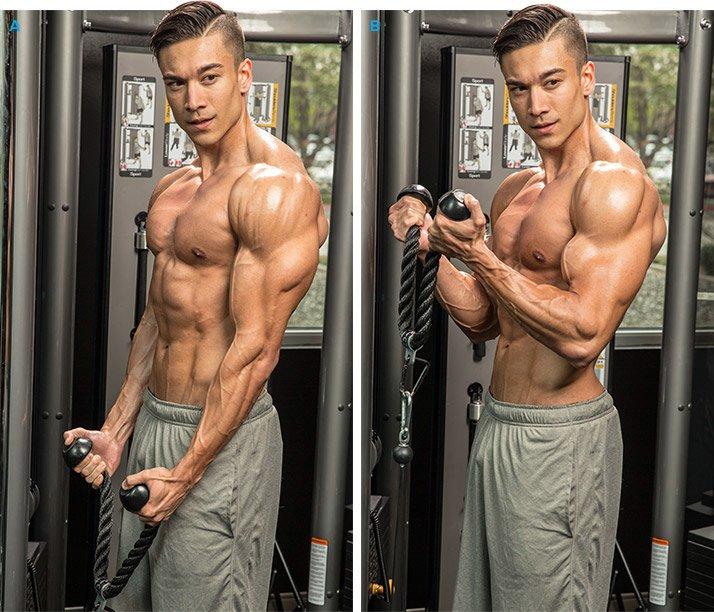 17 Inch Biceps Blaster By Striver