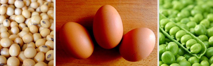 5 Vegetarian-Friendly Protein Powders